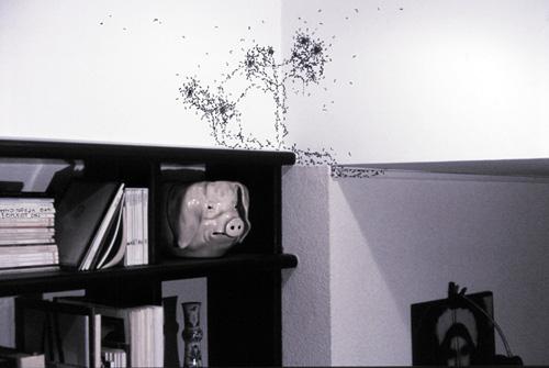 st phane steiner documents d 39 artistes paca. Black Bedroom Furniture Sets. Home Design Ideas